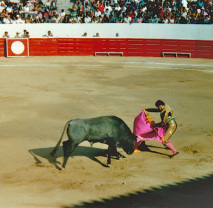 Bull fight, Mexico, gored by bull