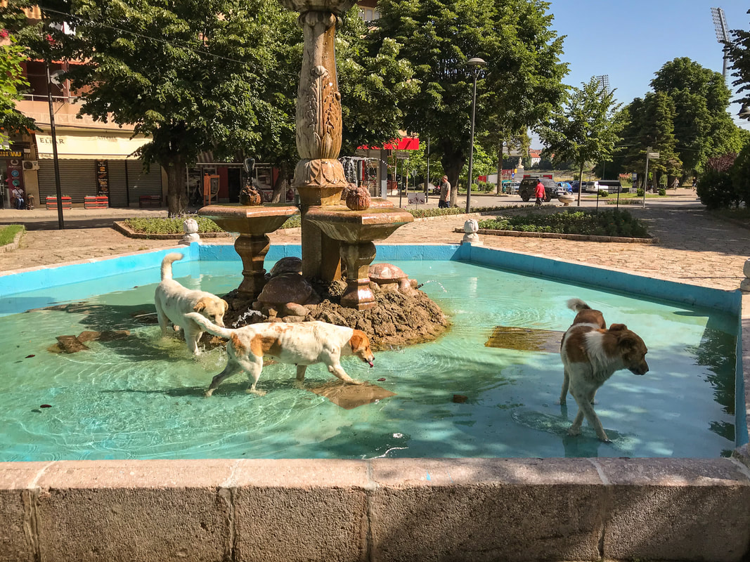 Packing, Food, Comfort: Lessons from 100 Days on the Road / Albanian dogs dancing in a fountain / Karen McCann / EnjoyLivingAbroad.com