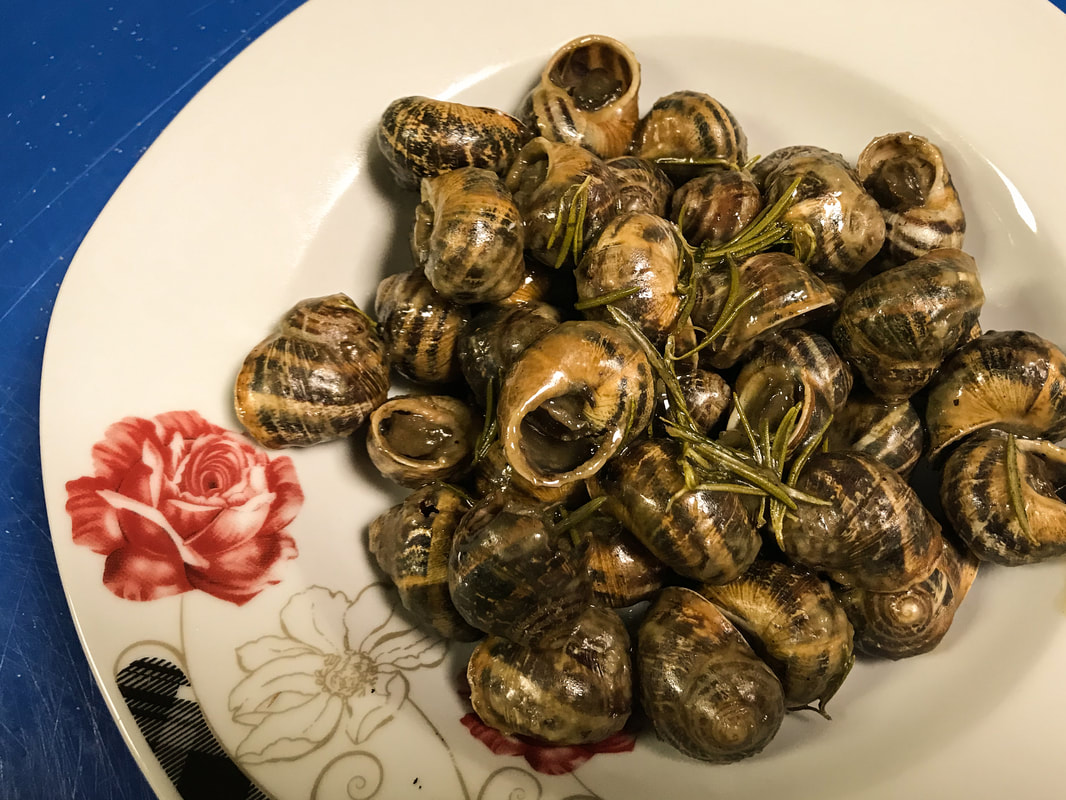 Snails of Chania. Crete, Greece / Holy Snail Day / Karen McCann / EnjoyLivingAbroad.com
